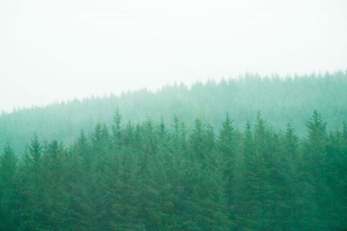 Fading_Forest